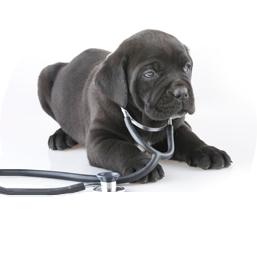 Pet Healthcare